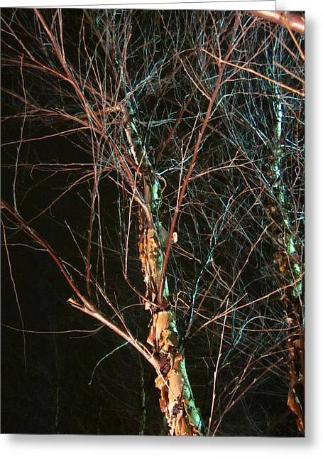 Guy Ricketts Photography Greeting Cards - Blessed Is The Birch Greeting Card by Guy Ricketts