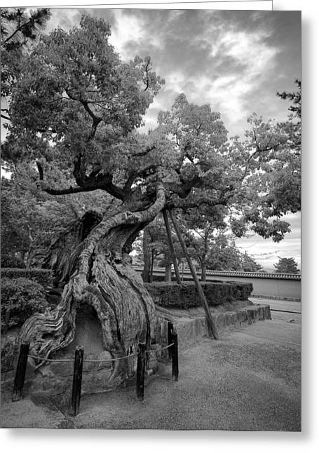 Kyoto Greeting Cards - BLESSED TREE of HORYUJI TEMPLE - JAPAN Greeting Card by Daniel Hagerman