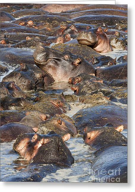 Hippos Greeting Cards - Bliss Greeting Card by Richard Garvey-Williams