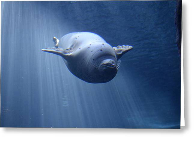 Ocean Mammals Greeting Cards - Blissful Abyss Greeting Card by Fraida Gutovich