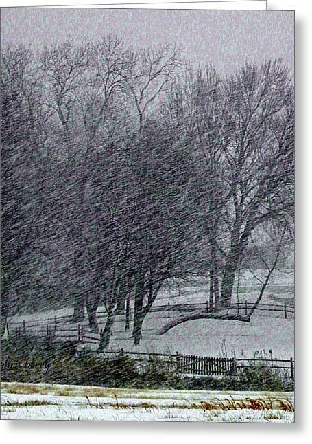 Sleet Greeting Cards - Blizzard 2013 Greeting Card by Chris Berry
