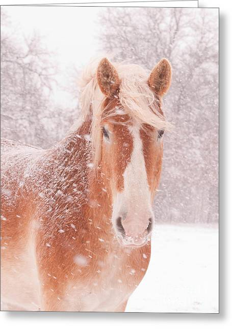 Blizzard Scenes Greeting Cards - Blizzard Belgian Greeting Card by Sari ONeal
