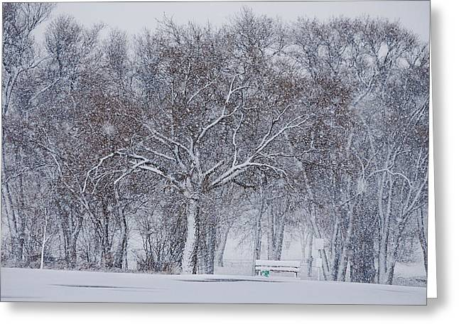 Snow Tree Prints Greeting Cards - Blizzard in the Park Greeting Card by Melany Sarafis
