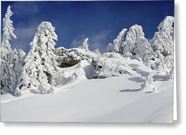 Powder Greeting Cards - Blizzard is gone Greeting Card by Uta Philipp