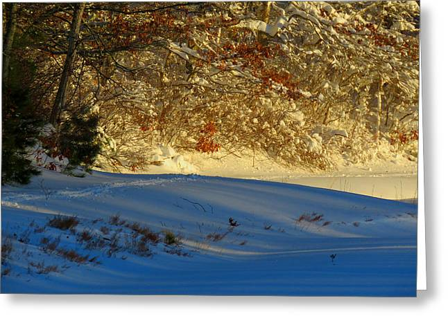New England Snow Scene Greeting Cards - Blizzard Sunrise Greeting Card by Dianne Cowen