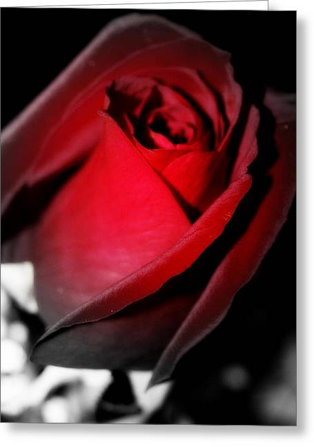 Photographs With Red. Greeting Cards - Blood Red Rose Greeting Card by Laurie Pike