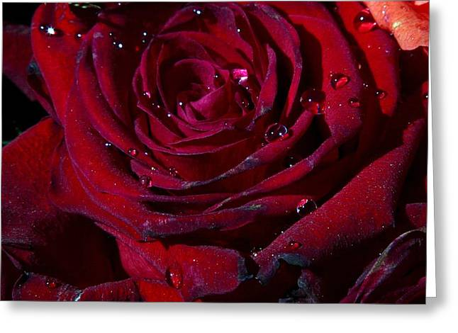 Water Drops On Rose Greeting Cards - Blood Red Rose Greeting Card by Linda Unger