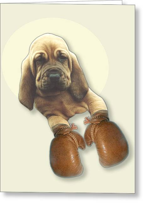 Bloodhound Boxer Greeting Card by Jimmy Collins