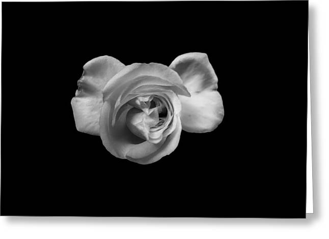 Digitalphotograph Greeting Cards - Bloom 5 Greeting Card by Michael Kelly-DeWitt