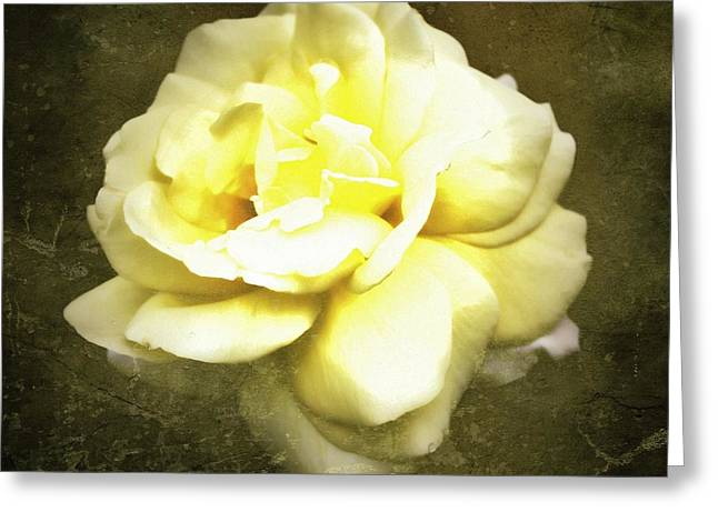 Pictures Of Oregon Greeting Cards - Bloom in full Greeting Card by Cathie Tyler