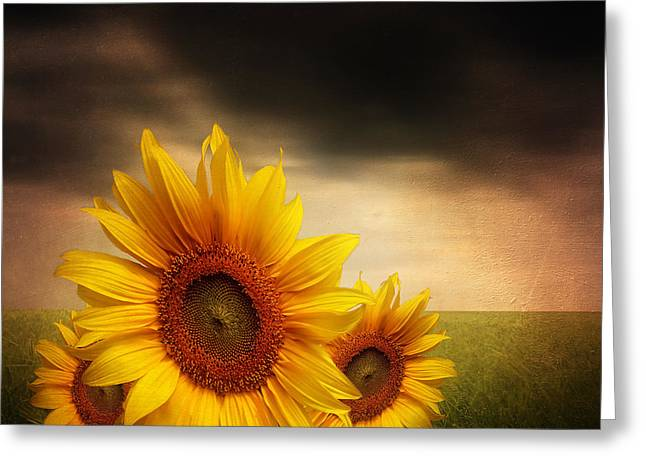 Sunflower Art Greeting Cards - Bloom In Gloom- Sunflower Art Greeting Card by Lourry Legarde