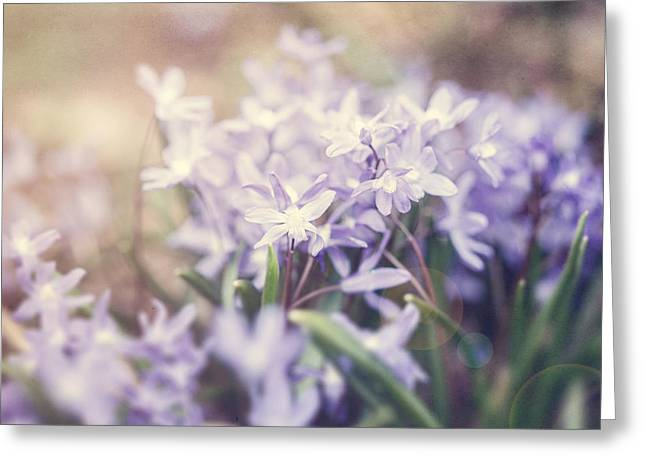 Soft Purple Greeting Cards - Bloom Greeting Card by Lisa Russo