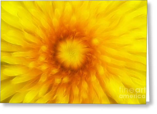 Subtle Colors Greeting Cards - Bloom Of Dandelion Greeting Card by Michal Boubin