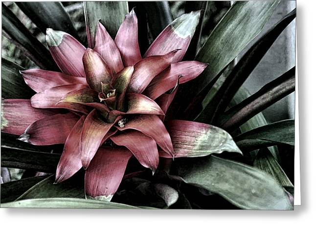 Artistic Photography Greeting Cards - Bloom Greeting Card by Tom Prendergast