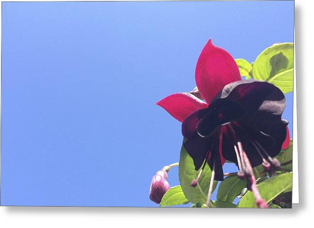 Fuchsia Dress Greeting Cards - Bloom With A View Greeting Card by Tamsin Maund
