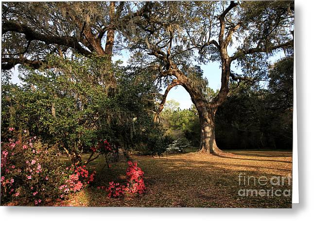Historic Site Greeting Cards - Blooming at the Plantation Greeting Card by John Rizzuto