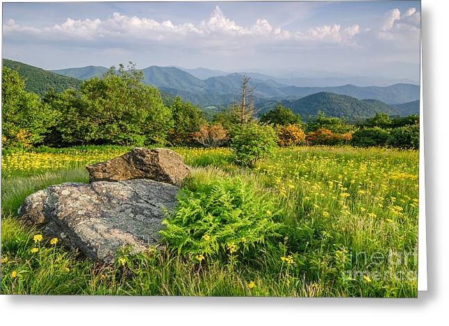 Southern Appalachians Greeting Cards - Southern Ragwort Greeting Card by Anthony Heflin