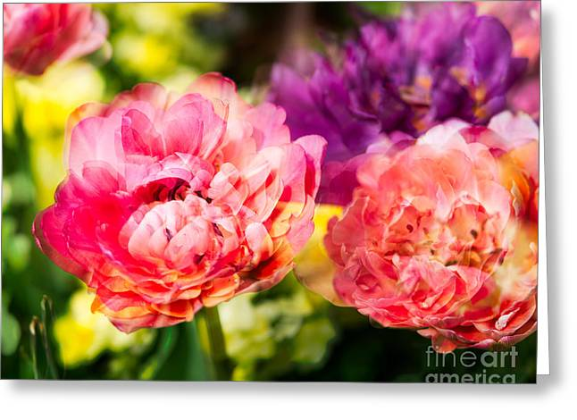 Pink And Purple Flowers Greeting Cards - Blooming Blooms Greeting Card by Sonja Quintero