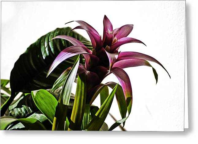 Featured Art Greeting Cards - Blooming Bromeliad Greeting Card by Christi Kraft