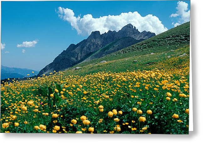 Days Pass Greeting Cards - Blooming Buttercup Flowers In A Field Greeting Card by Panoramic Images