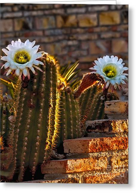 Blooming Cactus Greeting Card by Robert Bales