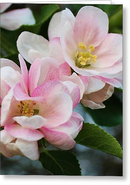 Blooming Crabapple Tree Greeting Card by Bruce Bley