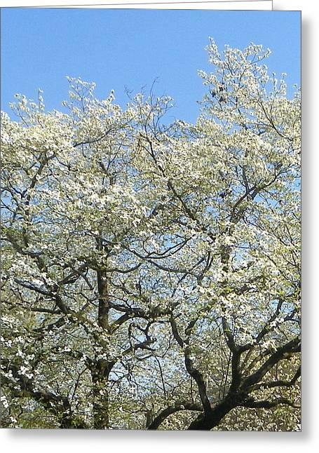 Tress Greeting Cards Greeting Cards - Blooming Dogwood Greeting Card by Sheri McLeroy