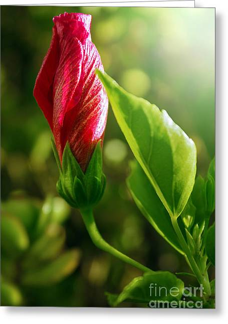 Nectar Greeting Cards - Blooming Flower  Greeting Card by Carlos Caetano