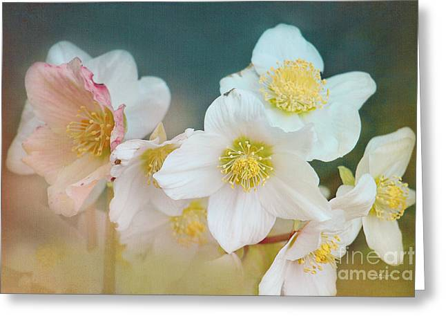 Winter Photos Greeting Cards - Blooming in Winter Greeting Card by Jutta Maria Pusl