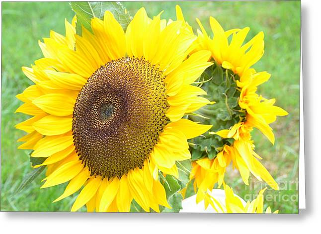 Blooms Greeting Cards - Blooming Sunflowers Greeting Card by DejaVu Designs