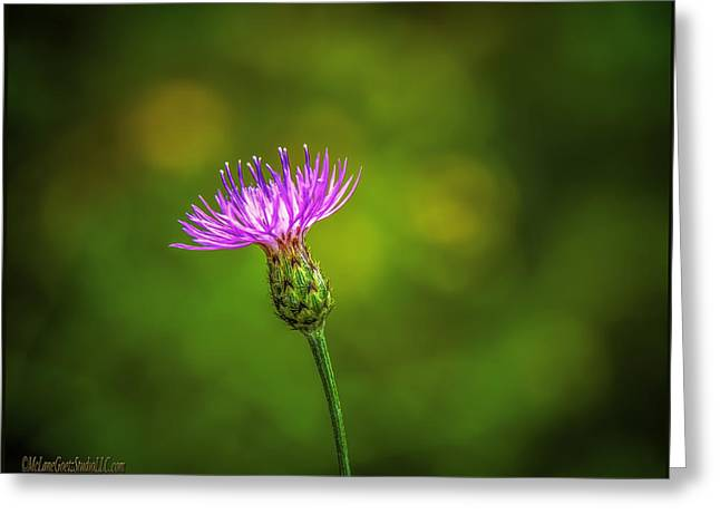 Wild Orchards Greeting Cards - Blooming Thistle Greeting Card by LeeAnn McLaneGoetz McLaneGoetzStudioLLCcom
