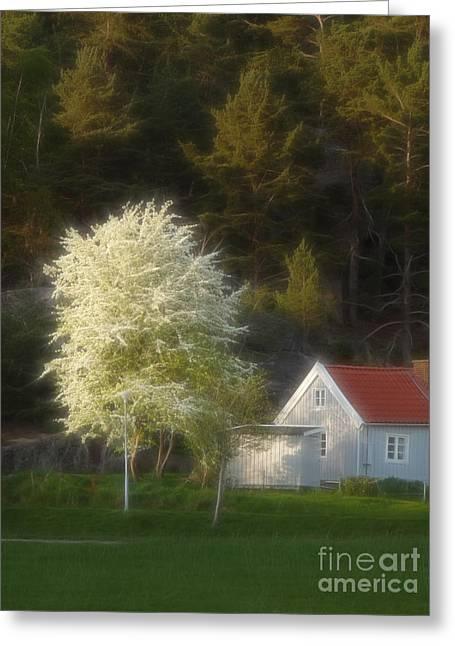 Blooming Trees Greeting Cards - Blooming Tree Greeting Card by Lutz Baar