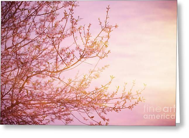 Apple Art Greeting Cards - Blooming tree over sunset Greeting Card by Anna Omelchenko