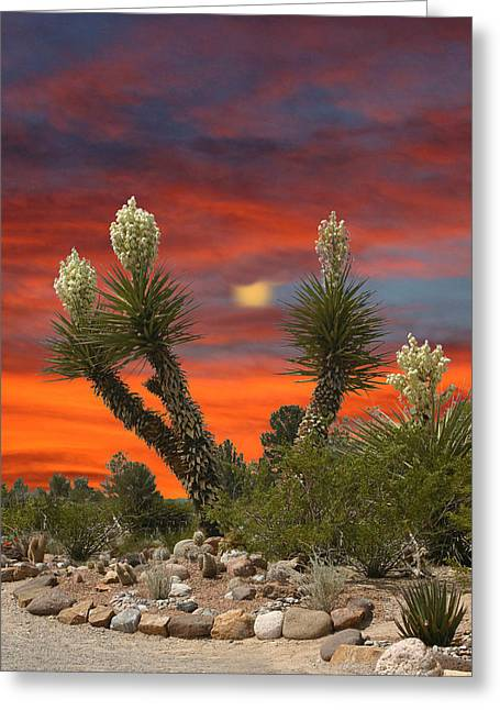 I-phone Case Greeting Cards - Yucca in full bloom Greeting Card by Jack Pumphrey