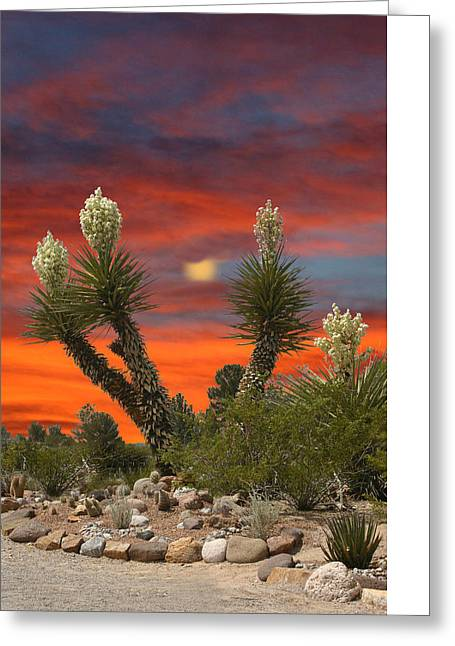 Yucca In Full Bloom Greeting Card by Jack Pumphrey