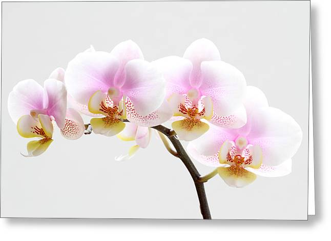 Blooms on White Greeting Card by Juergen Roth
