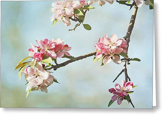 Close Focus Floral Greeting Cards - Blossom Branch Greeting Card by Kim Hojnacki