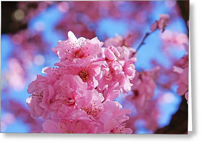Popular Flower Art Greeting Cards - Blossom Flowers Trees Art Prints Greeting Card by Baslee Troutman