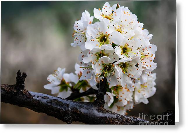 Terry Garvin Greeting Cards - Blossom Gathering Greeting Card by Terry Garvin