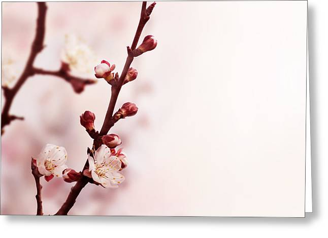 Pink Blossoms Greeting Cards - Blossom Greeting Card by Jelena Jovanovic