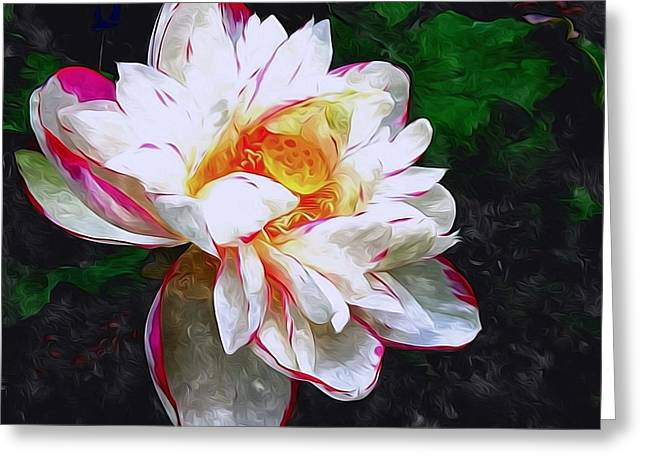 Aquatic Greeting Cards - Blossom Lotus Flower Greeting Card by Lanjee Chee