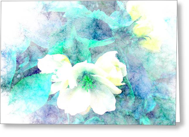 Floral Digital Art Digital Art Greeting Cards - Blossom Greeting Card by Louise Grant