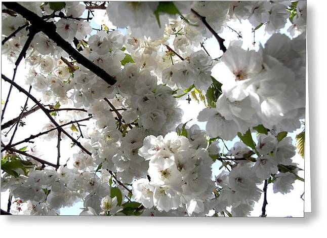 Tablets Greeting Cards - Blossom Greeting Card by Patrick J Murphy