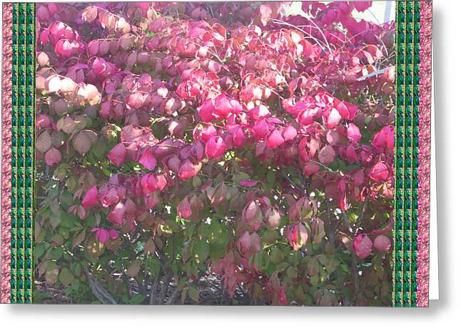 Marathon Champion Greeting Cards - Blossom Pink before fall colors in Oakville Ontario Canada  appreciating nature it deserves a great  Greeting Card by Navin Joshi