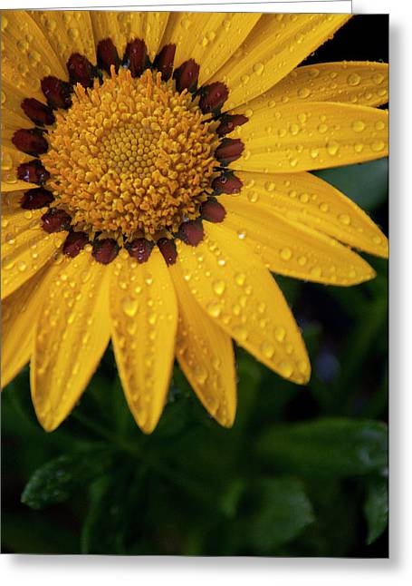 Raindrops On Flowers Greeting Cards - Blossom Greeting Card by Ron White