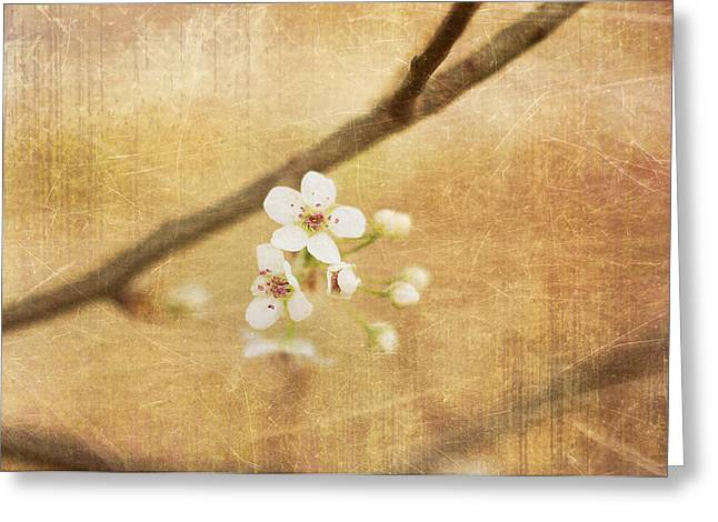 Sofia Walker Greeting Cards - Blossom Greeting Card by Sofia Walker
