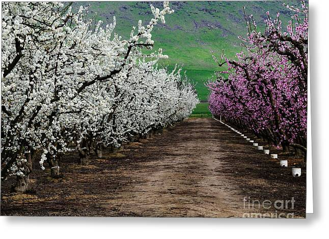 Terry Garvin Greeting Cards - Blossom Standoff Greeting Card by Terry Garvin