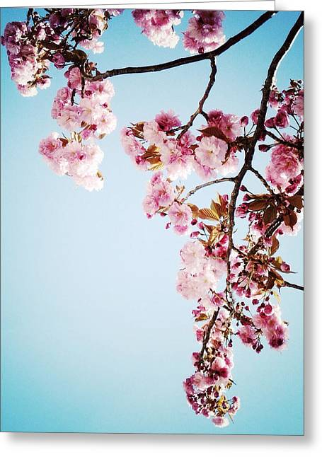 Prospects Greeting Cards - Blossoming Greeting Card by Natasha Marco