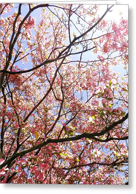 Recently Sold -  - Office Space Greeting Cards - Blossoming Pink Greeting Card by Robyn King