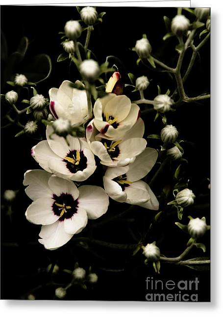 Van Dusen Botanical Garden Greeting Cards - Blossoms and Buds Greeting Card by Venetta Archer